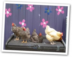 Astoria Animal Hospital and Vet Clinic